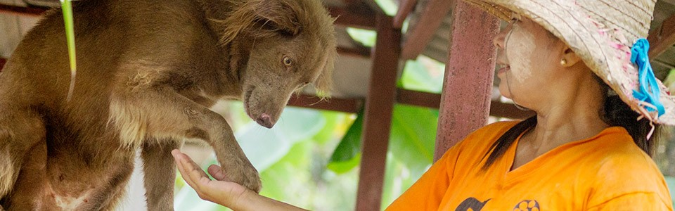 Soi Dog Foundation in Thailand